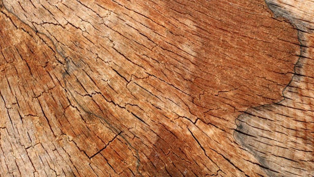Почему фасады из массива древесины нужно заказывать в Италии